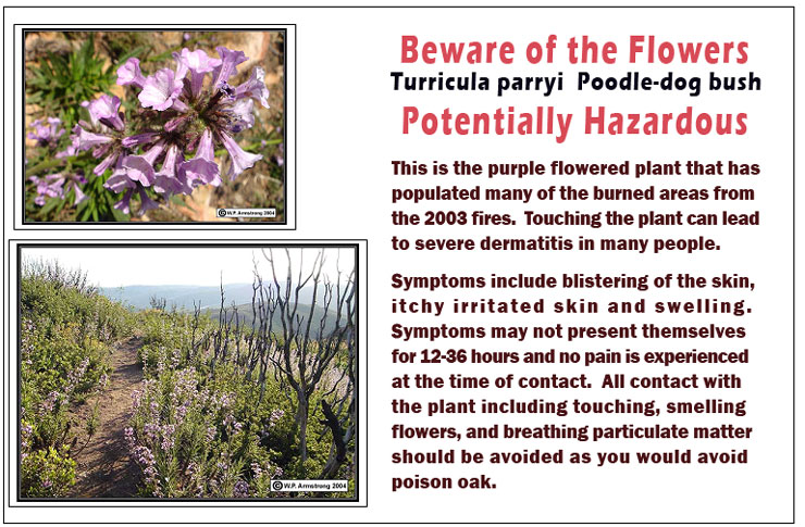 Beware of these Flowers